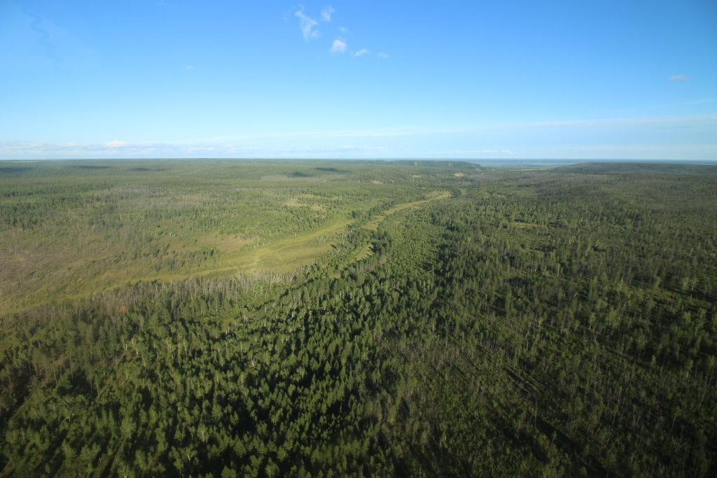 The Taiga of Yakutia
